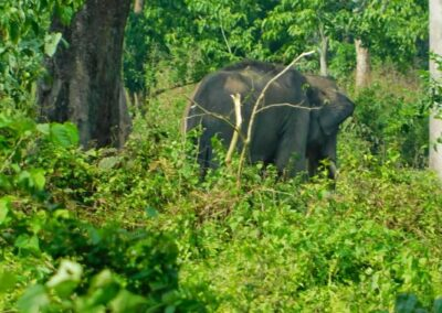 Buxa Tiger Reserve Jungle Trekking